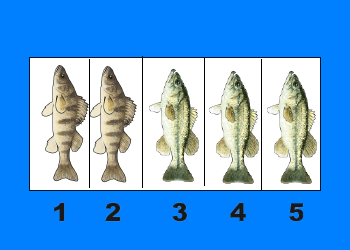 teaching equivalent fractions using fish